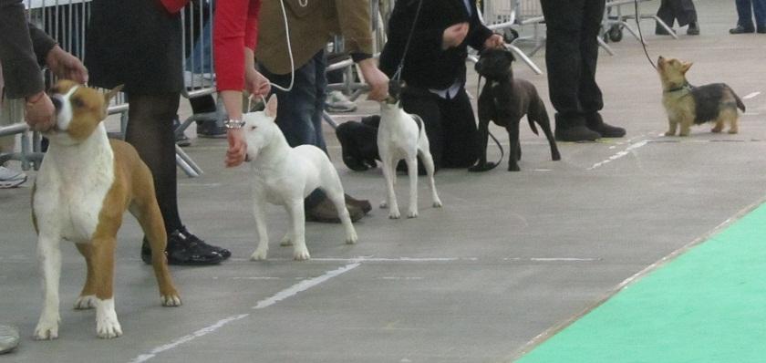 evo-sec-junior-terrier